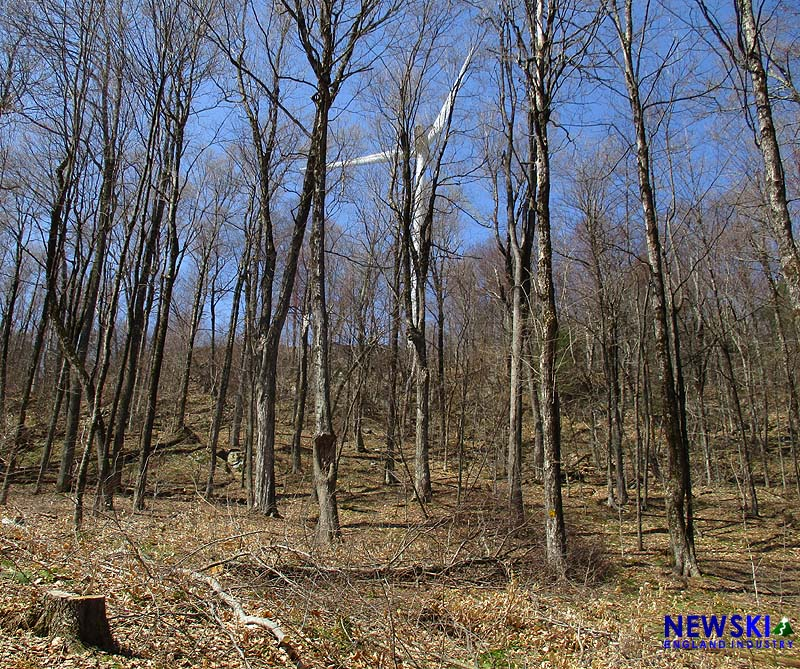 Berkshire East new trail clearing, April 16, 2017