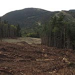 Green Peak Trail Clearing Nearing Completion at Waterville Valley
